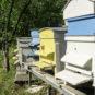 En litterær & konkret fortælling om bier af digter Morten Søndergaard